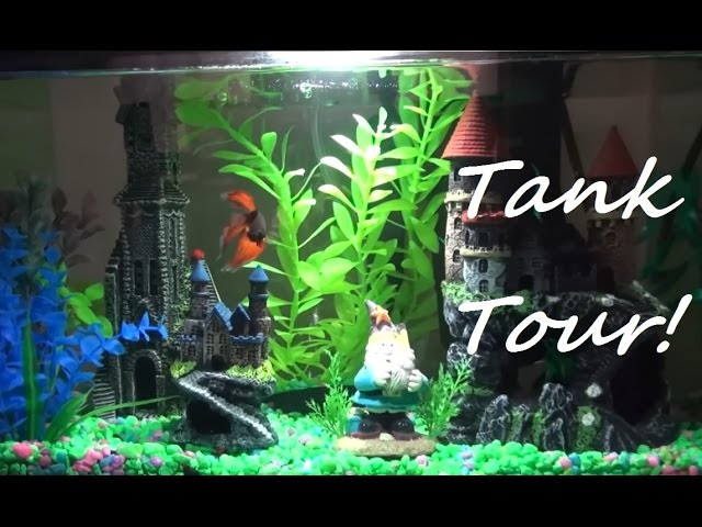 My Betta Draco's Hogwarts Harry Potter Theme Tank Tour!