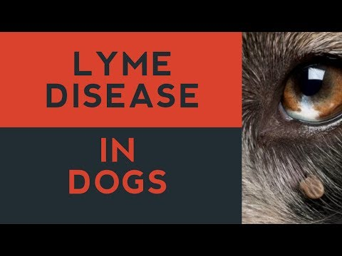 Video Lyme Disease In Dogs