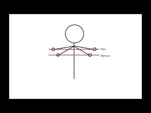 Les exercices pour laugmentation du montant du membre