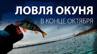 Рыбалка на окуня к конце октября