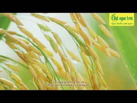 Gạo Hạt Ngọc Trời Thiên Vương - Gạo Thơm Đặc Sản | Gạo Phương Nam