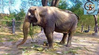 Слоны и больница для диких животных, лучший зоопарк. МанкиТайм в Таиланде