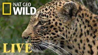 Safari Live - Day 87   Nat Geo Wild