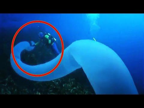 10 Fenômenos Incríveis nos Oceanos