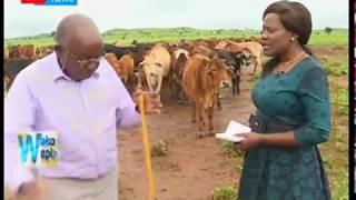Wako Wapi: Aliekuwa mbunge wa Kajiado David Sankore