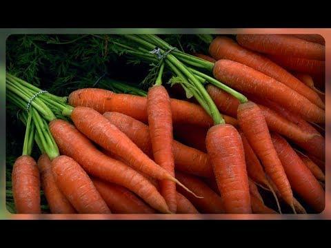 Питание и удобрение моркови
