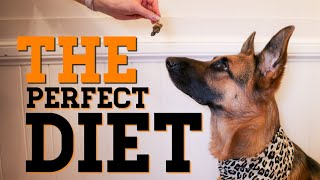 The perfect dog diet | What to feed your dog | German Shepherd