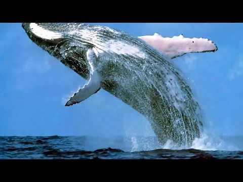 Endangered Species - A Short Video