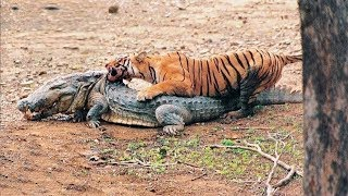 15 Times Animals Messed With The WRONG Opponent!