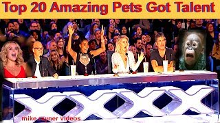 Best Top 20 Amazing Pet Animals Got Talent Auditions! Golden AGT - BGT Moments! Funny Dogs Cats!