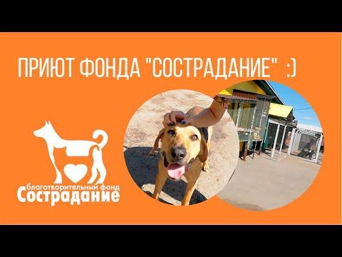 """Приют фонда """"Сострадание"""". Нижний Новгород."""