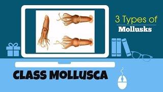 Mollusca Features