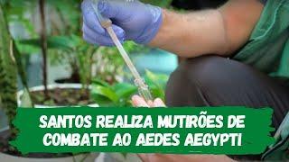 Santos realiza mutirões de combate ao Aedes aegypti