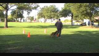 BullPen DTC - Shane Working Obedience