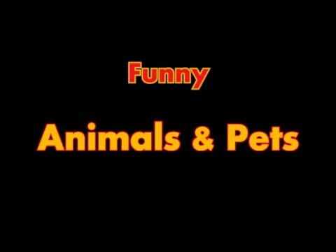 Funny Animals & Pets Compilation 2016