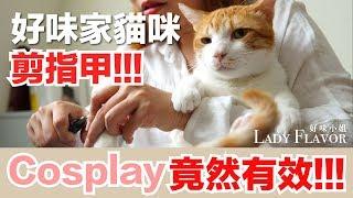 貓咪剪指甲!小撇步大成功!【好味貓日常微知識】EP3