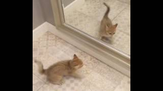 animale pisica super comica