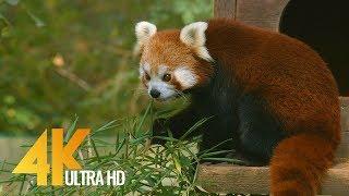 Дикие животные в Люблянском зоопарке в 4K | Релакс видео с расслабляющей музыкой 1.5 ч.
