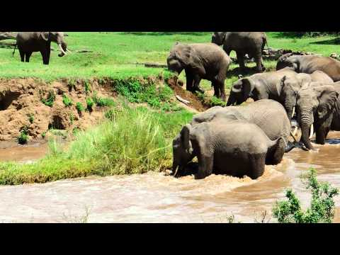 Caught on Video: Elephant Rescues Drowning Calf