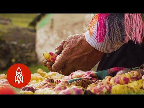 , title : 'The Farmer Growing 400 Different Kinds of Potatoes