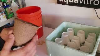 Starting some test seeds - GIANT PUMPKIN!