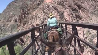 Grand Canyon Mule Ride 2016