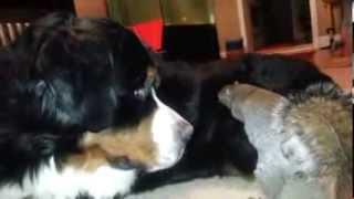 Смотреть онлайн Собака и белка: хитрый план