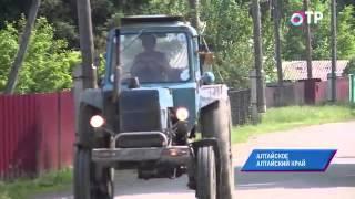 Малые города России: Алтайское - здесь выращивают непривычные для Сибири персики и абрикосы