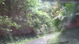 Andaman: Mount Harriot Dense Forests