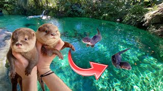 BABY OTTERS GO SWIMMING IN GIANT FRESHWATER LAGOON ! WHAT HAPPENS ?!