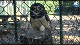 preview picture of video 'Papegaaienpark Oerle wordt Zoo Veldhoven'