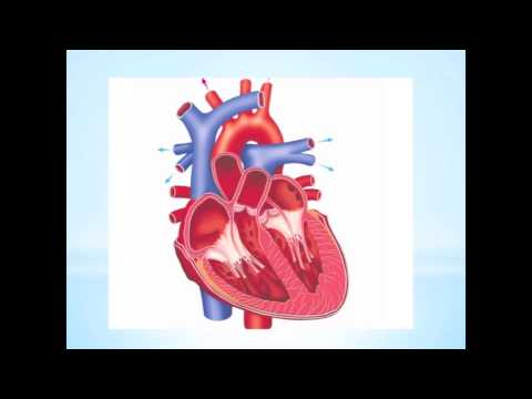 Qui est responsable de lhypertension artérielle