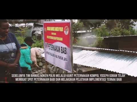 Pendistribusian Hewan Ternak Babi Kepada Masyarakat Puncak Jaya