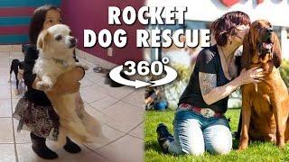 360° ROCKET DOG RESCUE (4K VR)