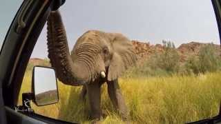 Very curious elephant in Damaraland, Namibia!
