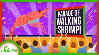 Why Thai Shrimps Parade on Land