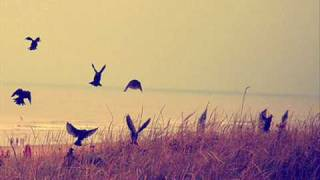 Dark Lotus - Black Crows