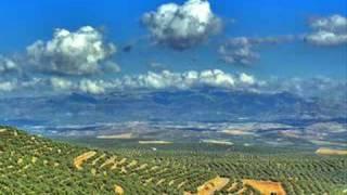 "Basia ""An olive tree"""