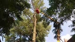 Спил дерева на подвязке