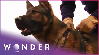 How Search Dogs Are Trained To Find People |  K9 Mounties  S1 EP2 | Wonder