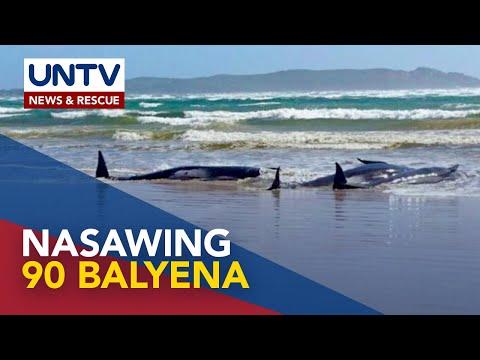 [UNTV]  90 balyena na stranded, patay sa Tasmania, Australia