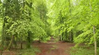 « En résonance avec la forêt »