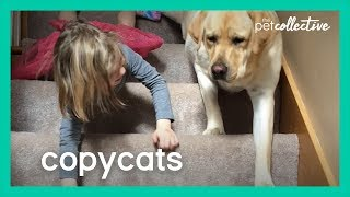 When Pet Animals Copy Their Owner - Copycats | The Pet Collective 2020