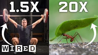 Why Humans Can't Lift as Much as Ants (And How We Could)   WIRED