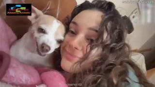 🤣Funny Dog Videos 2020🤣 🐶 youtube dog videos 2020