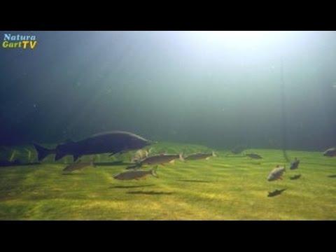 Teiche dauerhaft bauen, Teil 1: Ideale Schwimm-, Fisch- und Naturteiche