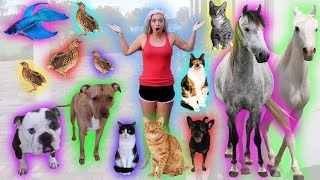 FEEDING ALL MY PETS * NIGHT TIME ROUTINE * | NICOLE SKYES