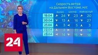 """""""Погода 24"""": лесные пожары не прекратятся в ближайшее время - Россия 24"""