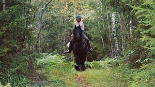 Batman & Matilde: A Day With A Friesian Dream Horse
