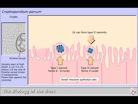 Penyakit hpv hiv